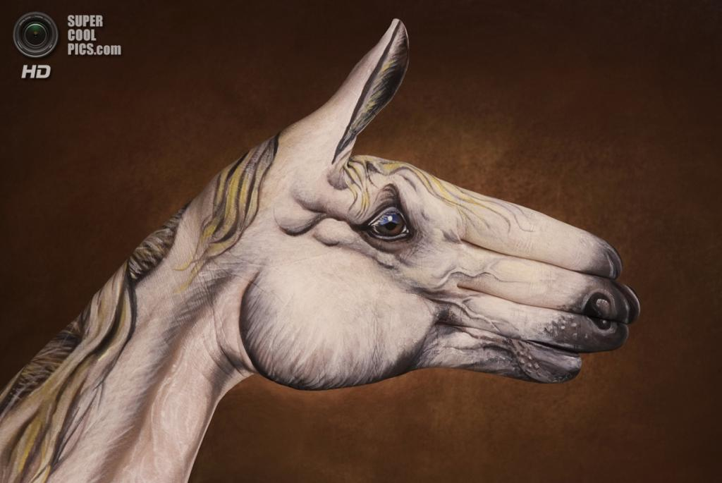 Лошадь. (Guido Daniele)
