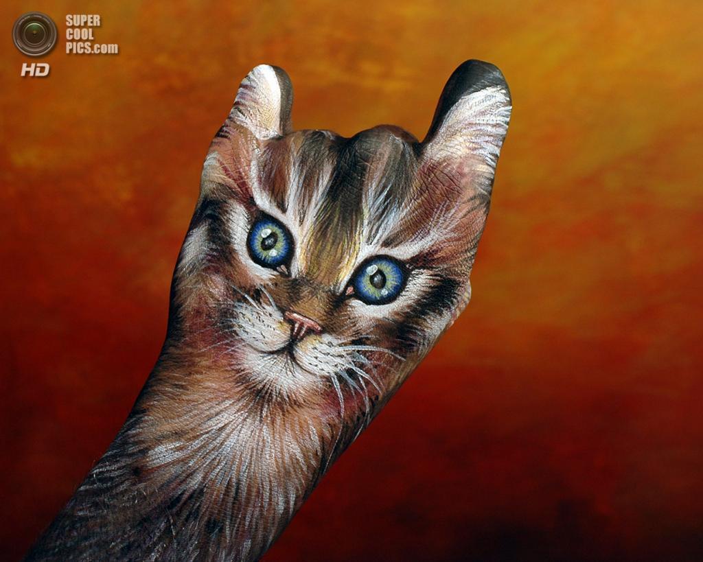 Кошка. (Guido Daniele)