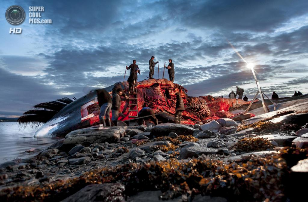 Столетия назад эскимосы охотились на гренландских китов. В те времена охота на китов была частью сложного и очень важного ритуала, хотя бы из-за размера улова. Положение, которое эскимосы определяют для себя в этом мире, тесно связано с духом всего сущего, включающем в себя каждое живое существо. (Robert Frechette/2014 Sony World Photography Awards)