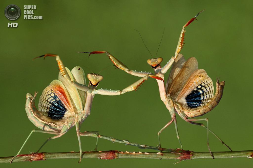 Вот так танец! (Hasan Baglar/2014 Sony World Photography Awards)