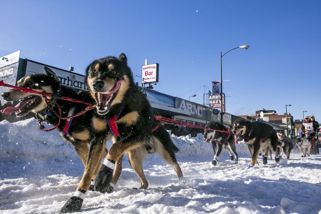США. Анкоридж, Аляска. 1 марта. Упряжка Джейсона Макки на старте гонки «Идитарод-2014». (REUTERS/Nathaniel Wilder)