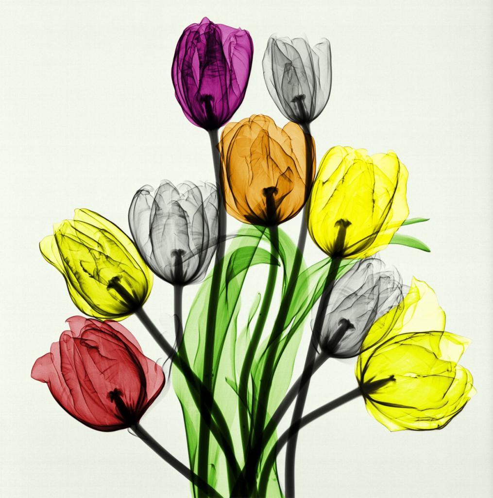 «Букет тюльпанов». (Arie van't Riet)