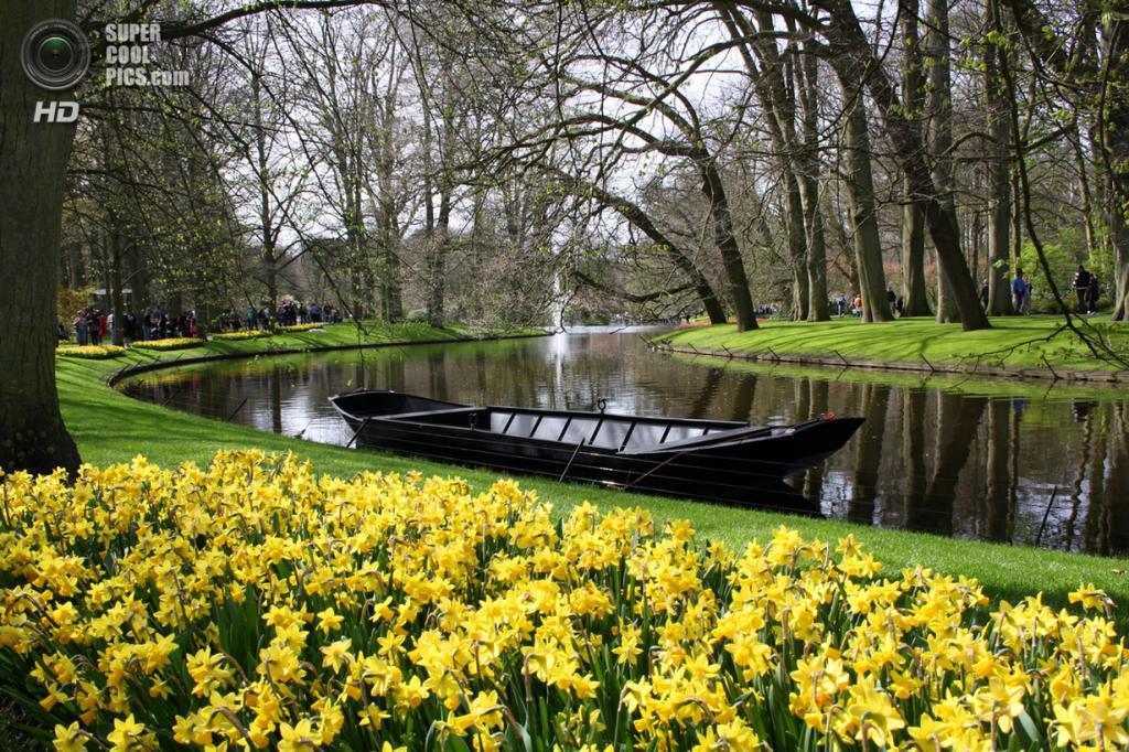 Нидерланды. Лиссе. В королевском парке цветов Кёкенхоф. (Arnaud Ozeel)