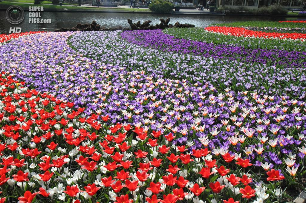 Нидерланды. Лиссе. В королевском парке цветов Кёкенхоф. (Carlos Almir Dias)
