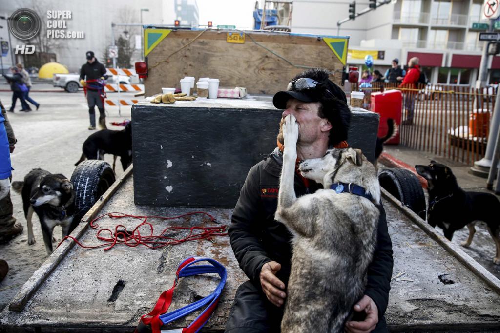 США. Анкоридж, Аляска. 1 марта. Собака из упряжки Джейсона Макки ластится к своему хозяину. (REUTERS/Nathaniel Wilder)