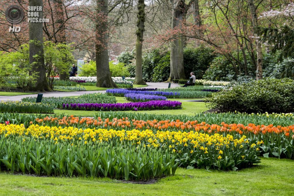 Нидерланды. Лиссе. В королевском парке цветов Кёкенхоф. (Enrico Lapponi)