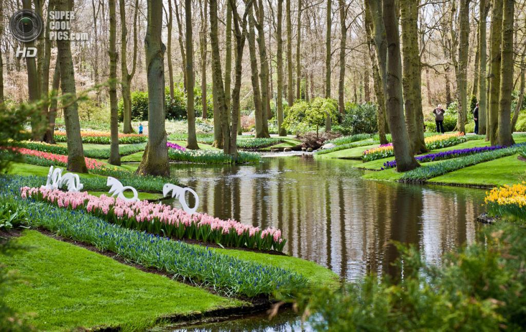 Нидерланды. Лиссе. В королевском парке цветов Кёкенхоф. (Andrea B)