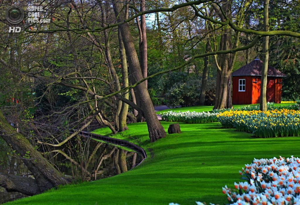 Нидерланды. Лиссе. В королевском парке цветов Кёкенхоф. (Marek GERNÁT)