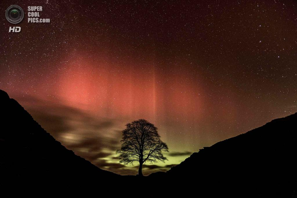 Великобритания. Нортамберленд, Англия. 27 февраля. Сикомор в свете северного сияния. (Guy Edwardes/SIPA Press)