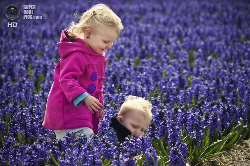 Нидерланды. Лиссе. В королевском парке цветов Кёкенхоф. (Krishna Chaitanya)