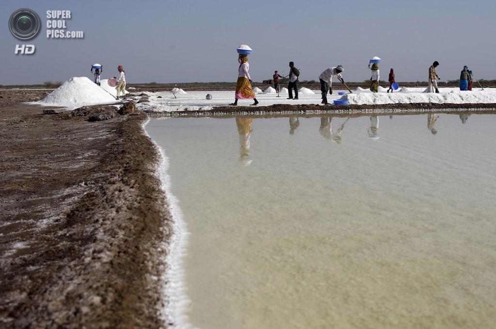 Индия. Кач, Гуджарат. 2 марта. Добыча соли на солончаковом болоте в Большом Качском Ранне. (REUTERS/Ahmad Masood)