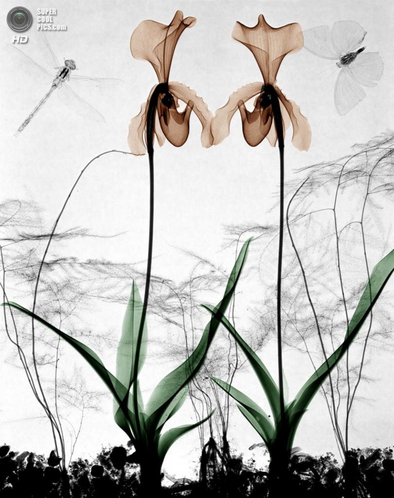 «Орхидеи». (Arie van't Riet)