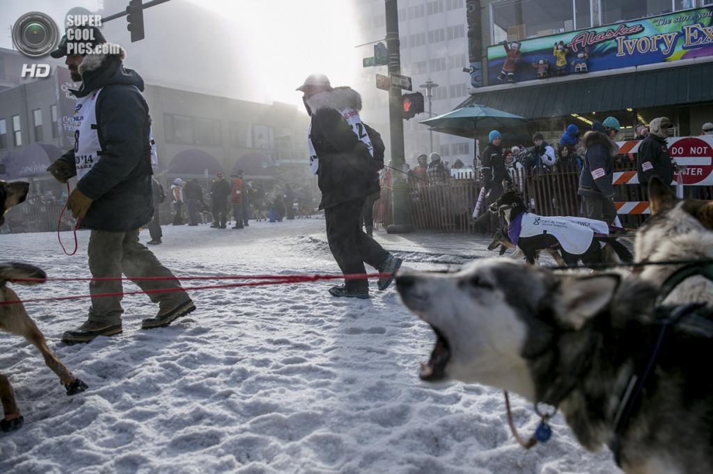 США. Анкоридж, Аляска. 1 марта. Некоторые собаки выражают своё нетерпение лаем. (REUTERS/Nathaniel Wilder)