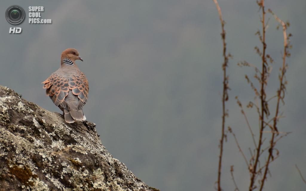 Непал. Национальный парк Сагарматха. (Aditi Das Patnaik)