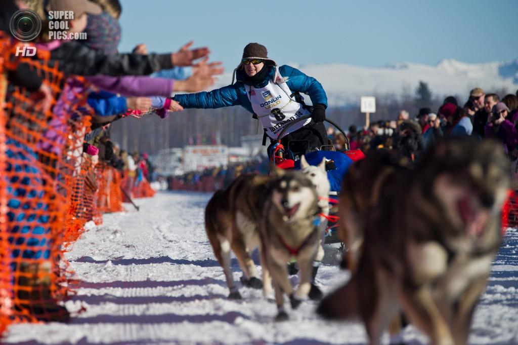 США. Уиллоу, Аляска. 2 марта. Зрители приветствуют упряжку Ивонны Дабакк. (Marc Lester/Anchorage Daily News/MCT)