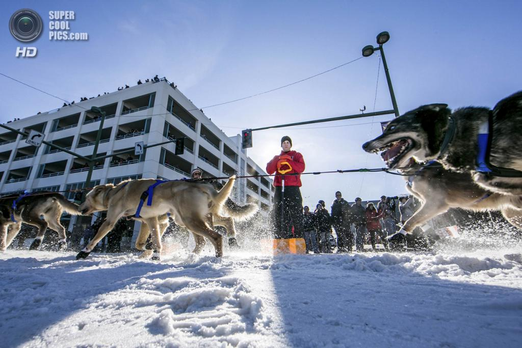 США. Анкоридж, Аляска. 1 марта. Упряжка Кэтрин Кит мчит по 4-й авеню. (REUTERS/Nathaniel Wilder)