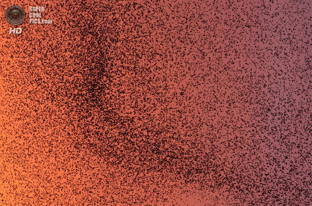 Великобритания. Гретна, Дамфрис и Галлоуэй, Шотландия. 4 ноября 2011 года. Стая скворцов улетает на юг. (AP Photo/Scott Heppell)
