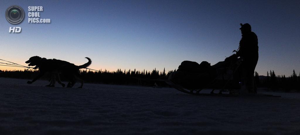 США. Фингер-Лейк, Аляска. 3 марта. Собаки тянут упряжку Роберта Бундцена. (Bob Hallinen/Anchorage Daily News/MCT)