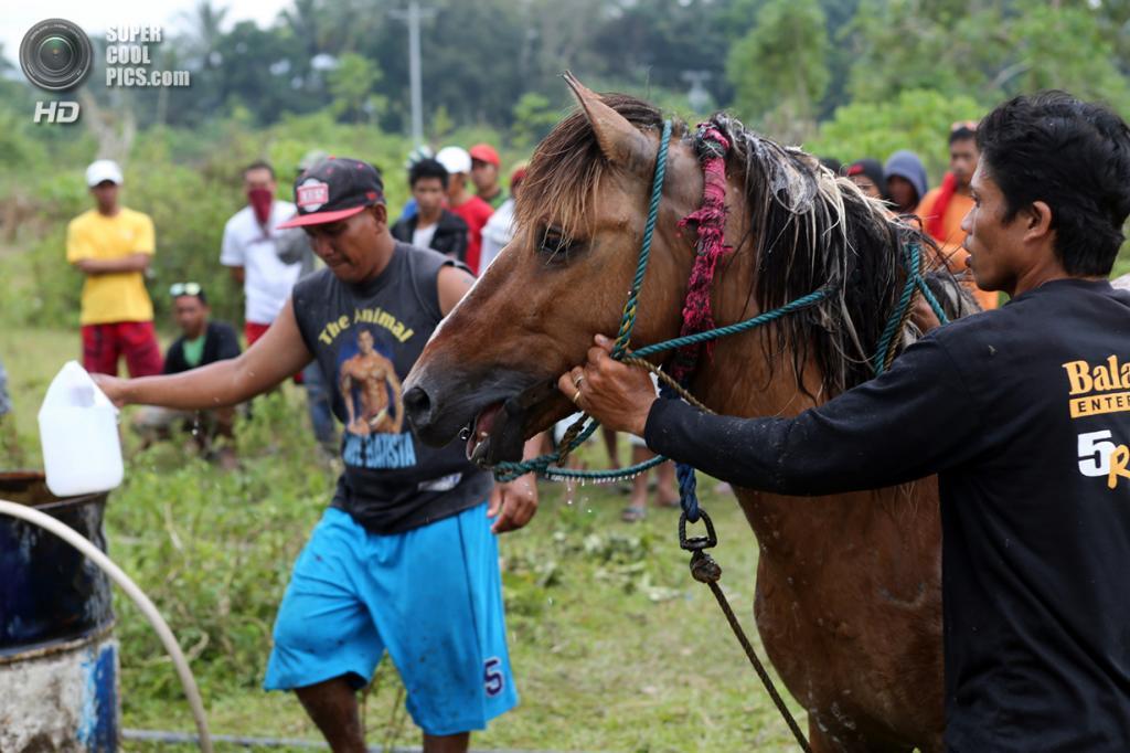 Филиппины. Тболи, Южный Котабато. 10 марта. Победитель после боя. (Jeoffrey Maitem/Getty Images)