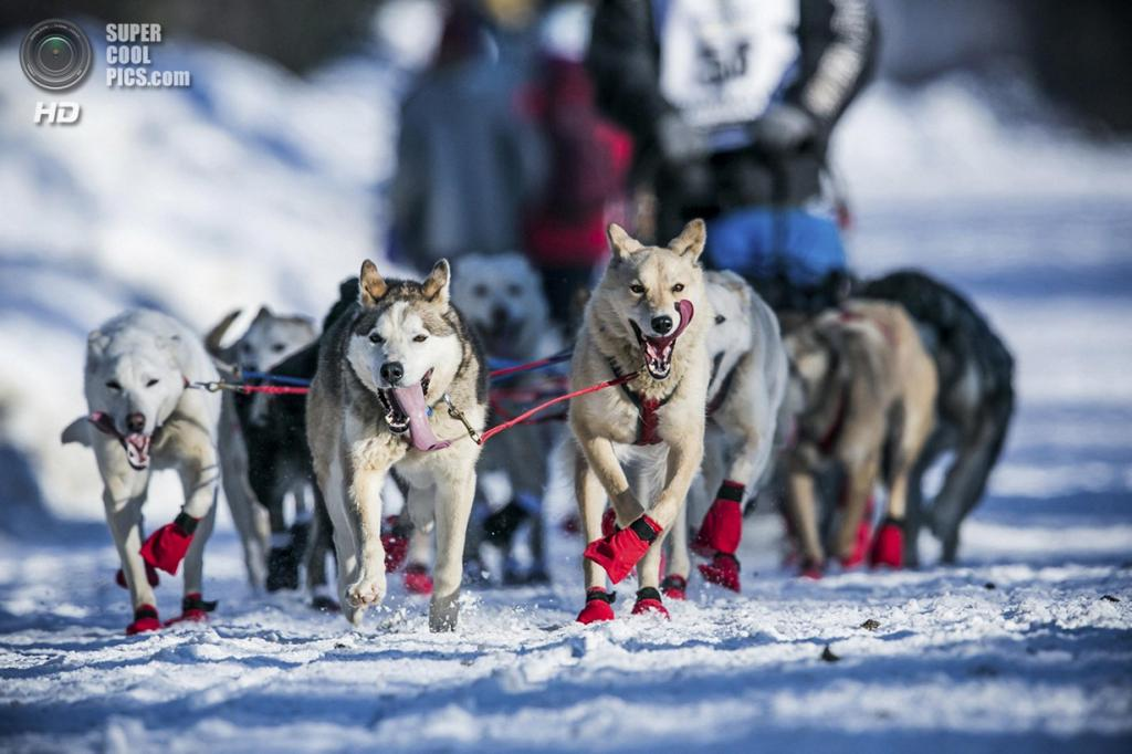 США. Уиллоу, Аляска. 2 марта. Сосредоточенные на тропе. (REUTERS/Nathaniel Wilder)
