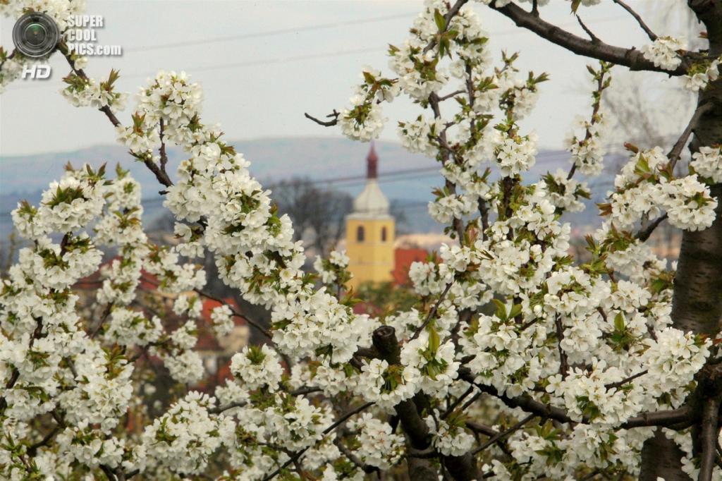 Чехия. Хельчице, Страконице, Южночешский край. (Slavomír Kubeš)
