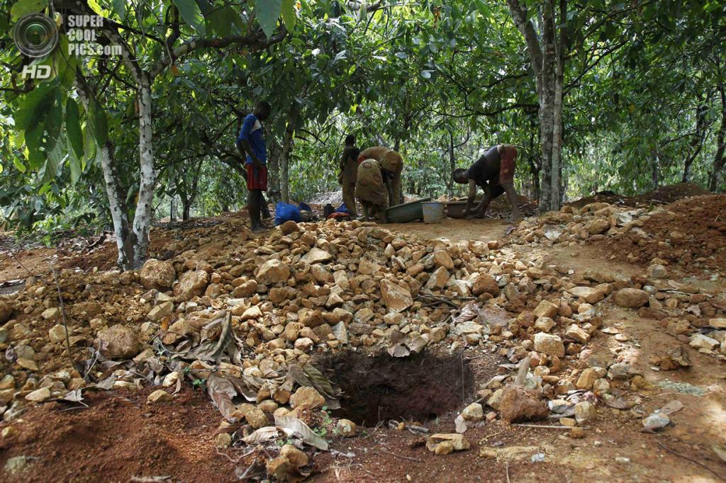 Кот-д'Ивуар. Буафле, Марауэ. 18 марта. Добыча золота на бывшей плантации какао. (REUTERS/Luc Gnago)