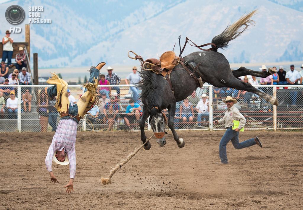 Полудикая лошадь скидывает наездника-чемпиона на родео в Монтане. (Carol Lynne Fowler/Smithsonian.com)
