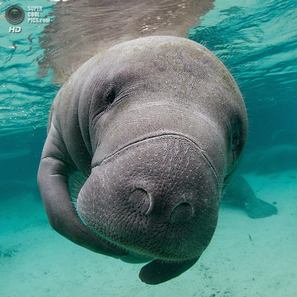 Категория: Freshwater. 1 место. (Ellen Cuylaerts/UnderwaterPhotography.com)