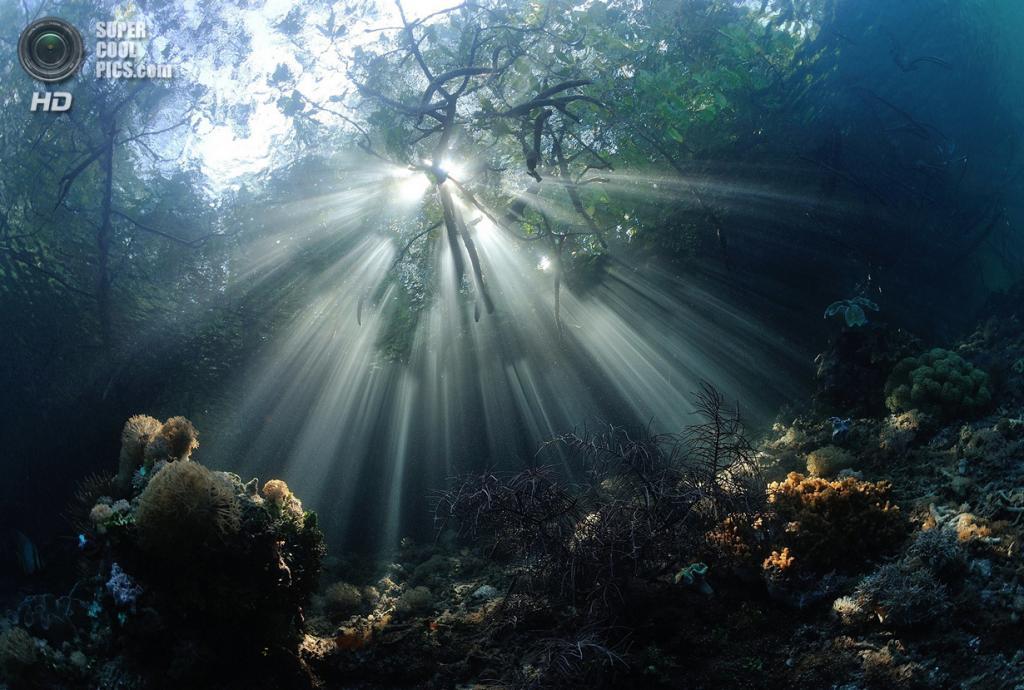 Категория: Wide-angle/Natural Light. 1 место. (Nadya Kulagina/UnderwaterPhotography.com)