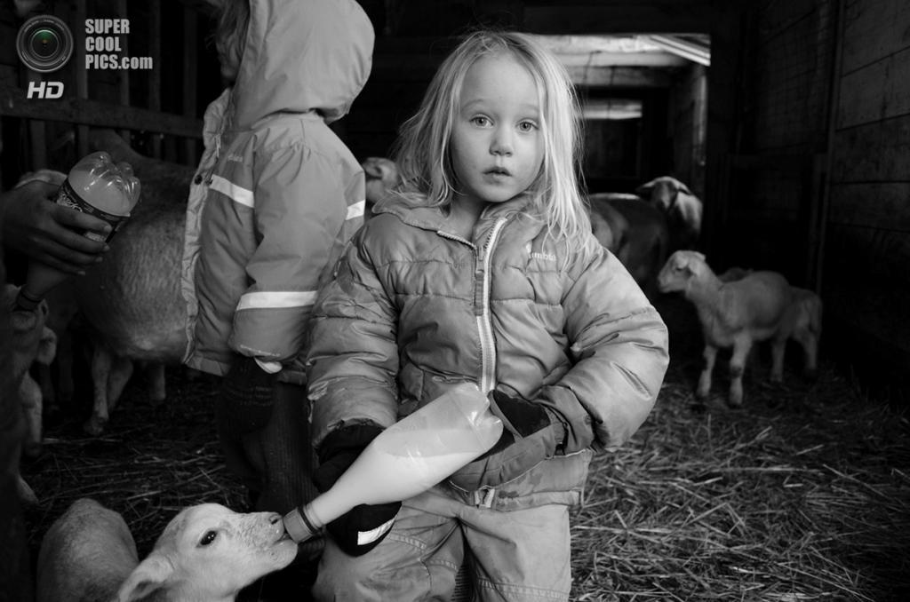 Время кормления на ферме Хетти-Белль, штат Массачусетс. (Abigail Friel/Smithsonian.com)