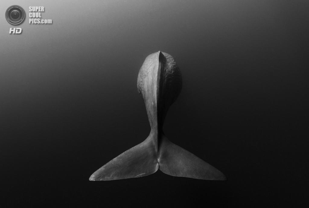 Категория: Wide-angle/Natural Light. 3 место. (Shane Gross/UnderwaterPhotography.com)