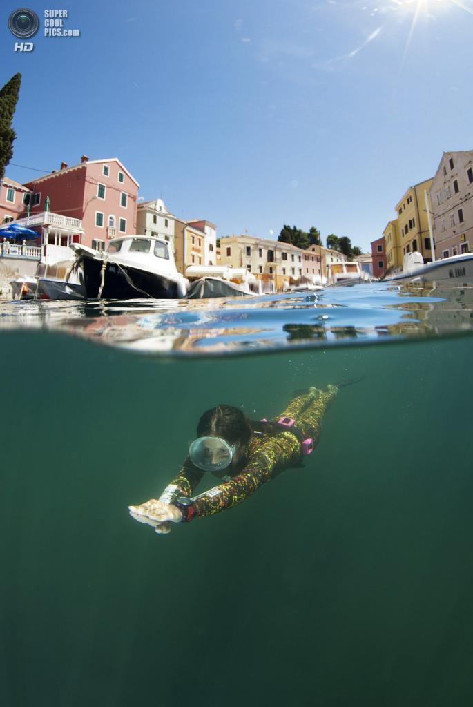 Категория: Under/Over. (Marjan Radovic/UnderwaterPhotography.com)