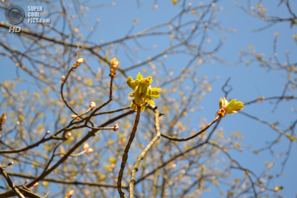 Ранняя весна в Киеве (Сергей Данишевский)