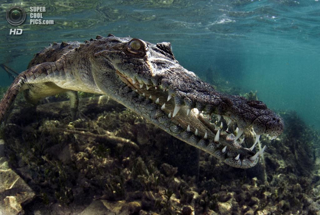 Категория: Wide-angle/Close Focus. 2 место. (Gleb Tolstoy/UnderwaterPhotography.com)