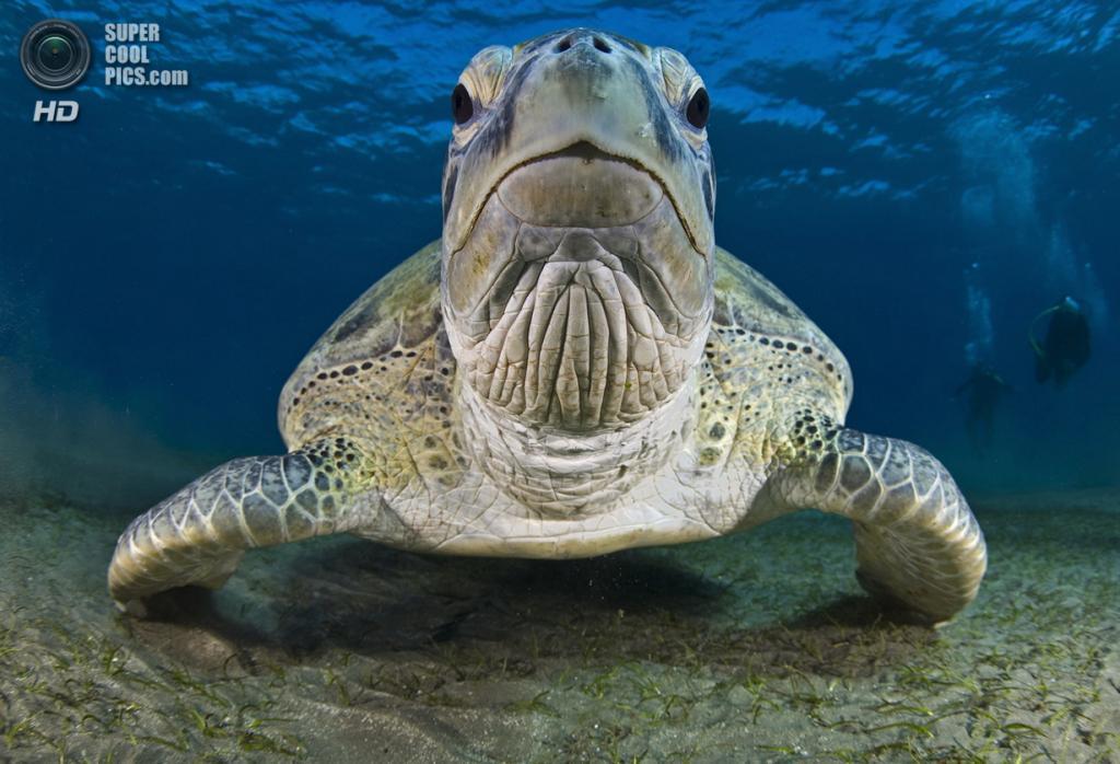 Категория: Wide-angle/Close Focus. 1 место. (Helmy Hashim/UnderwaterPhotography.com)