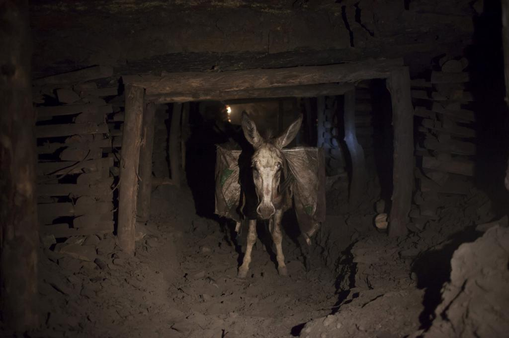 A donkey carrying sacks of coal walks through the narrow tunnels of a coal mine, in Choa Saidan Shah in Punjab province