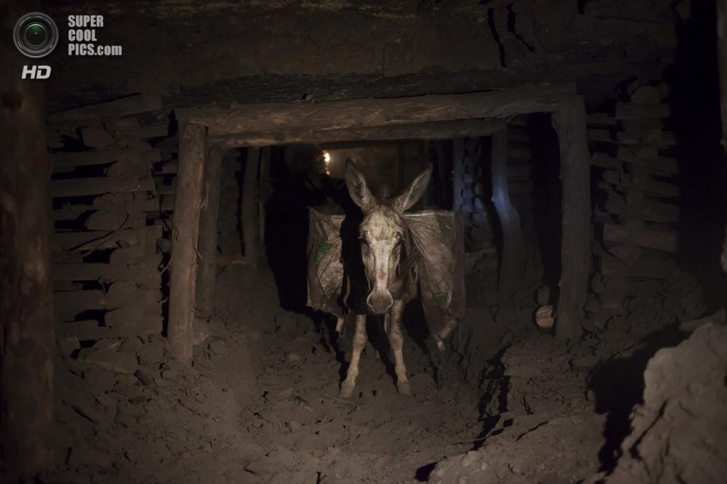 Пакистан. Чоа-Сайдан-Шах, Пенджаб. 29 апреля. Осёл, нагруженный углём, бредёт из шахты на поверхность. (REUTERS/Sara Farid)