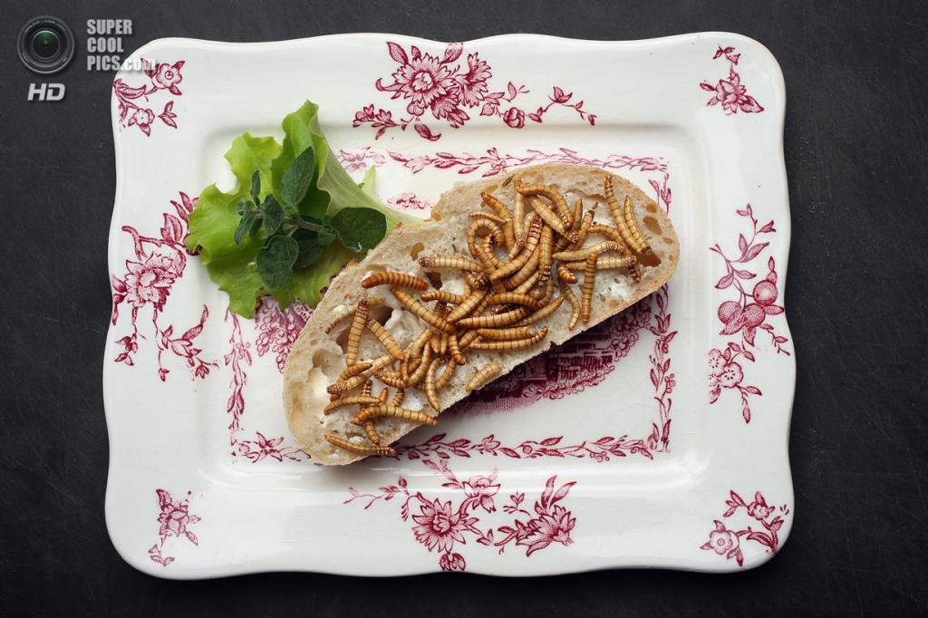 Германия. Берлин. 7 мая. Бутерброд с сушёными мучными червями, приправленными корицей, кориандром, перцем и другими специями. (Sean Gallup/Getty Images)