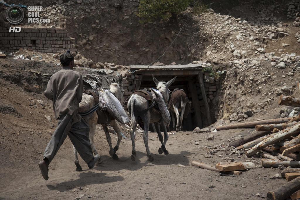 Пакистан. Чоа-Сайдан-Шах, Пенджаб. 29 апреля. Поводырь загоняет ослов в шахту для транспортировки угля. (REUTERS/Sara Farid)