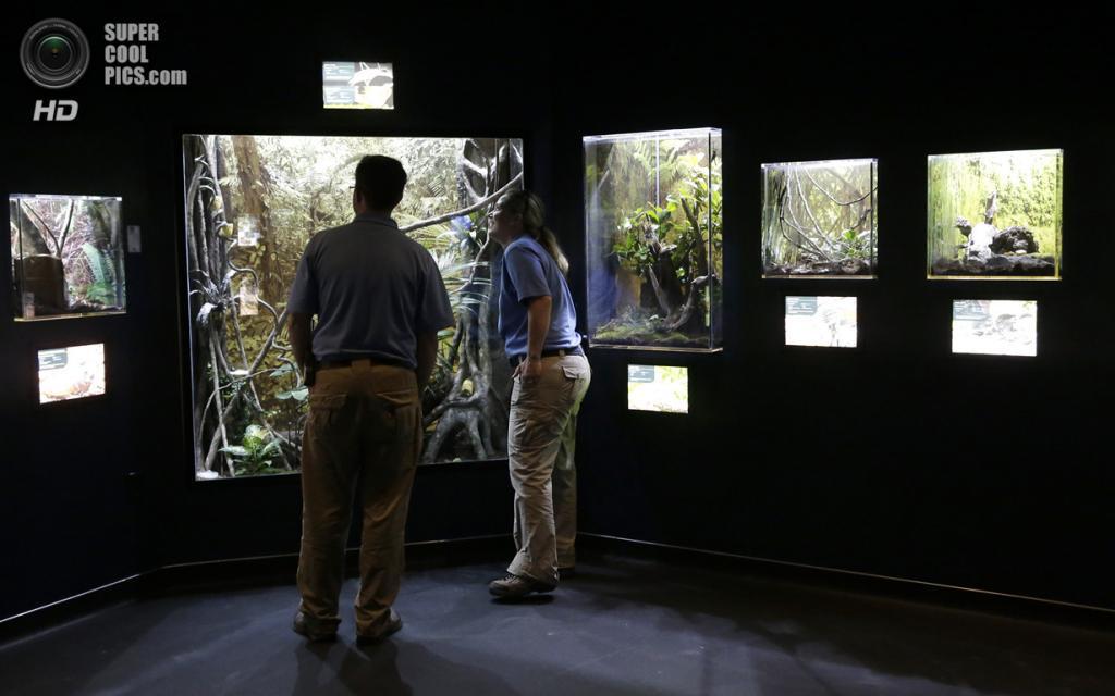 США. Хьюстон, Техас. 23 мая. Работники Хьюстонского зоопарка осматривают своих подопечных в инсектарии The Bug House. (AP Photo/Pat Sullivan)