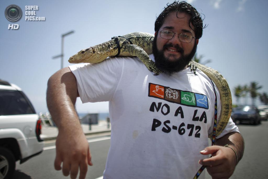 Пуэрто-Рико. Сан-Хуан. 21 мая. Кристиан Давид и его полосатый варан. (AP Photo/Ricardo Arduengo)