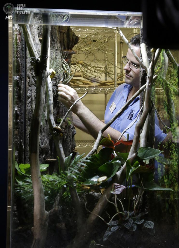 США. Хьюстон, Техас. 23 мая. Куратор детских экскурсий Хьюстонского зоопарка Кевин Ходж берёт жука для демонстрации. (AP Photo/Pat Sullivan)