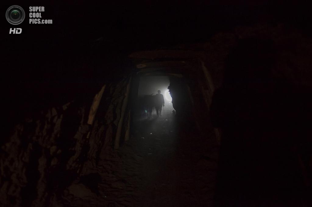 Пакистан. Чоа-Сайдан-Шах, Пенджаб. 29 апреля. Ослы бредут в чёрные глубины угольной шахты. (REUTERS/Sara Farid)