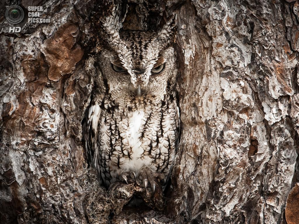 Поощрительный приз: Национальный резерват дикой природы Окфеноки. (Graham McGeorge)