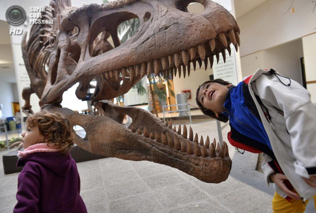 Аргентина. Трелев, Чубут. 18 мая. Мальчик разглядывает копию черепа тираннозавра рекса в Музее палеонтологии имени Эджидио Ферульо. (REUTERS/Maxi Jonas)