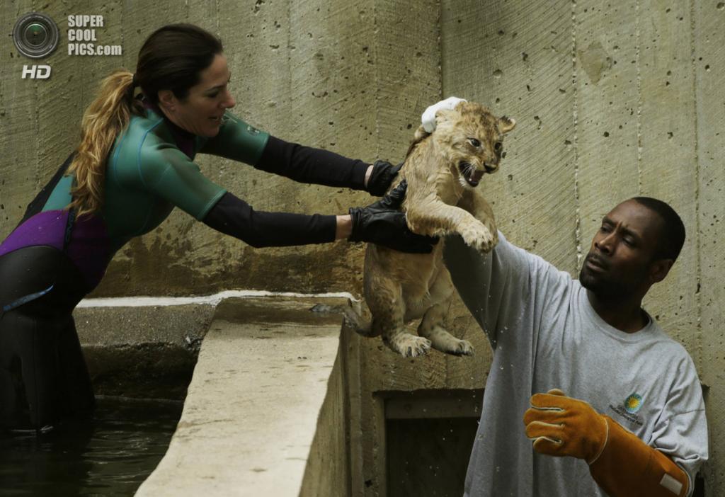 США. Вашингтон, округ Колумбия. 6 мая. В Смитсоновском Национальном зоологическом парке. (REUTERS/Gary Cameron)