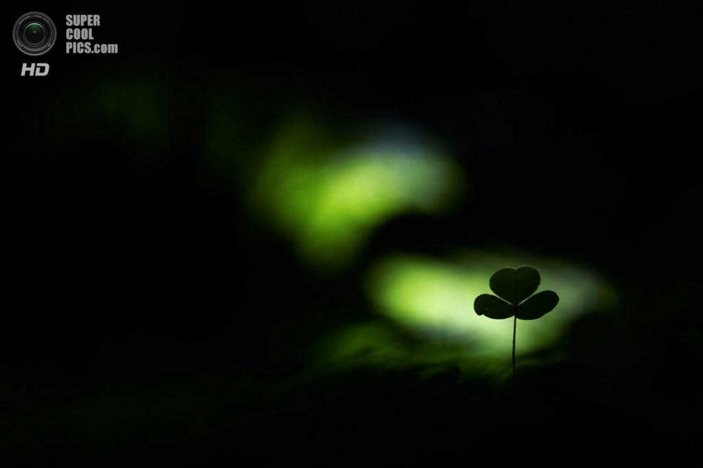 Победитель в номинации «Растения и грибы». «Spotlight im Wald». (Klaus Tamm)