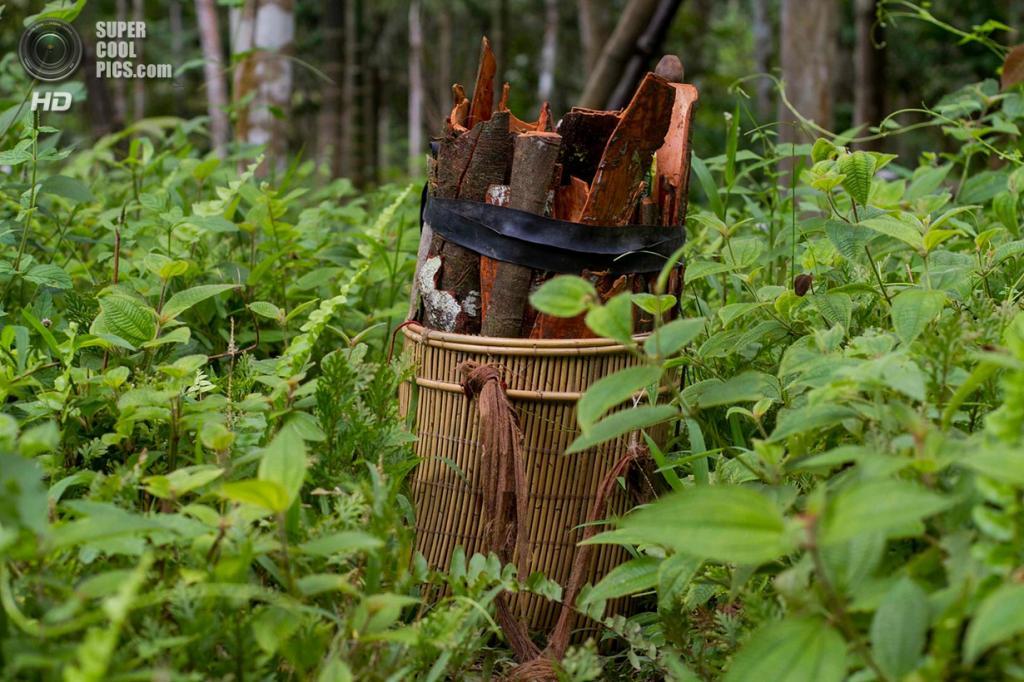 Корзина с корицей, которую собирают в провинции Джамби на острове Суматра. Центр международных лесохозяйственных исследований выделил местных жителей за то, что они берегут лес. (Tri Saputro/CIFOR)