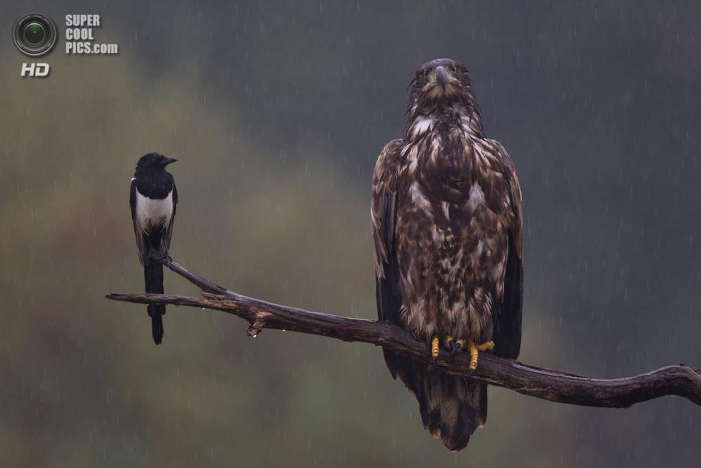 3 место в номинации «Птицы». «Mieses Wetter». (Bernd Lamm)