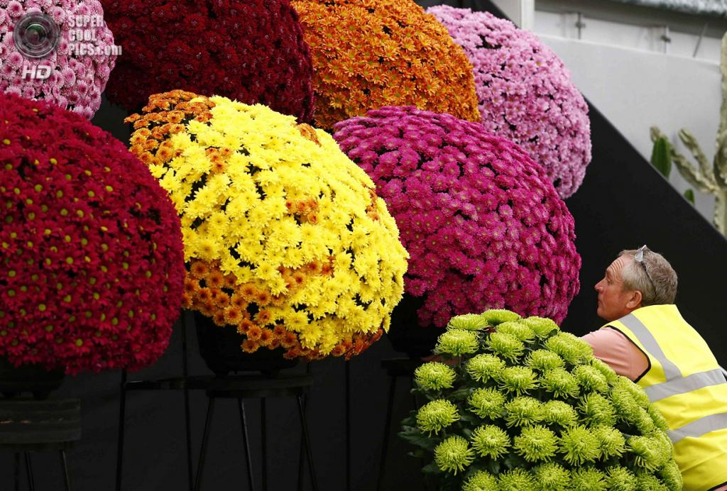 Выставка цветов лондон